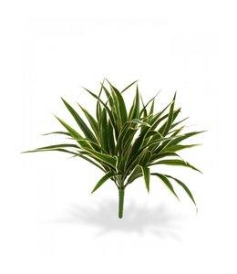 Chlorophytum S boeket 30 cm