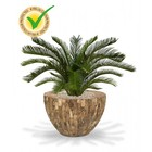 Cycas kunstpalm M Deluxe 80 cm UV