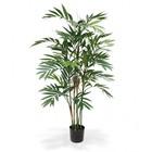 Chamaedoria Palm Deluxe 150 cm