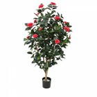 Camelia Japonica Deluxe 150cm rose