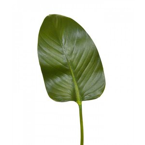 Zijden Strelitzia blad deluxe 75 cm