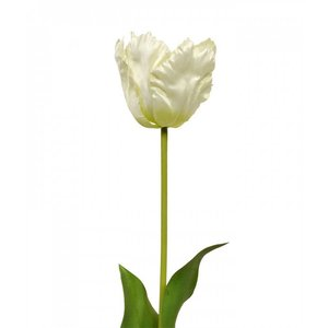 Van Gogh Tulp kunstbloem 70 cm creme