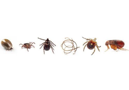 Anti Parasites