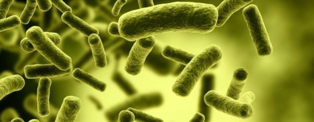 Desinfectans