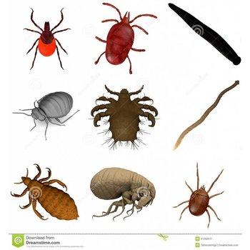 Äußere Parasiten