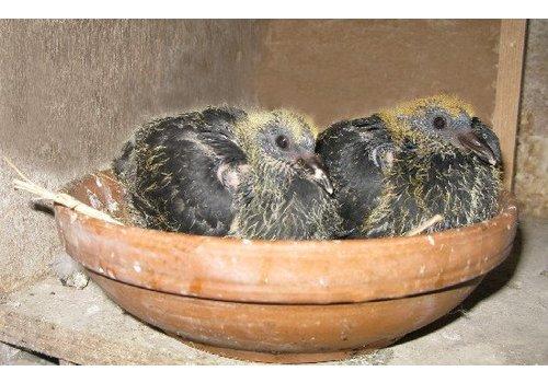 For breeding