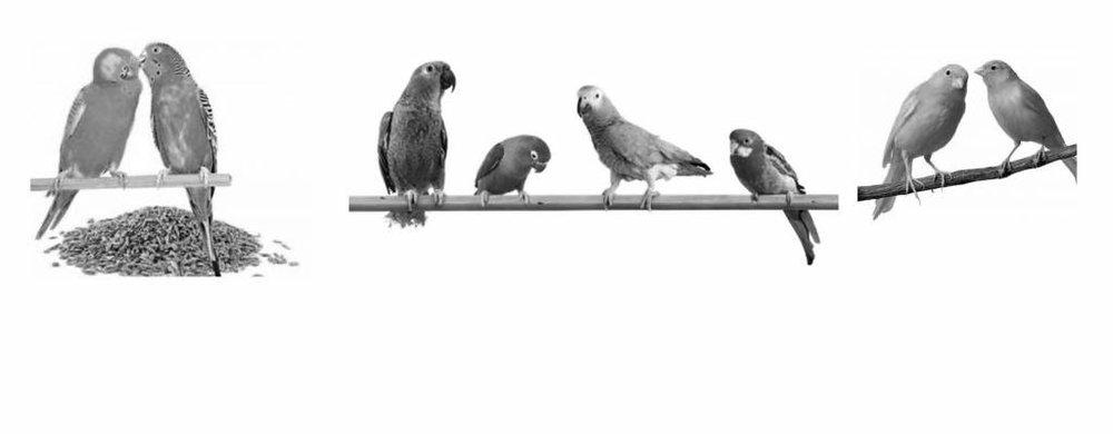 Birds & Tropische Vögel