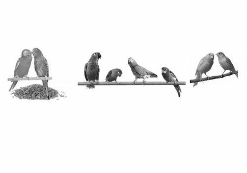 Birds & Tropical birds