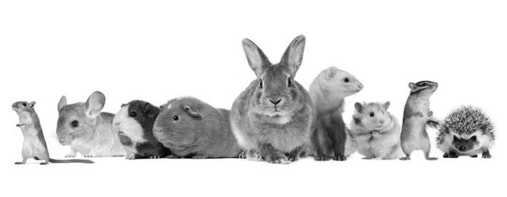 Zoogdieren & knaagdieren