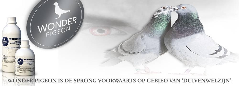 Wonder Pigeon