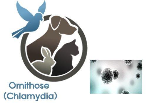 Ornithose (Chlamydia)