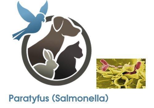 Para Typhus (Salmonella)