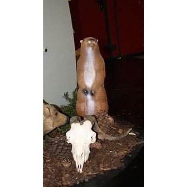3D marmota en pie
