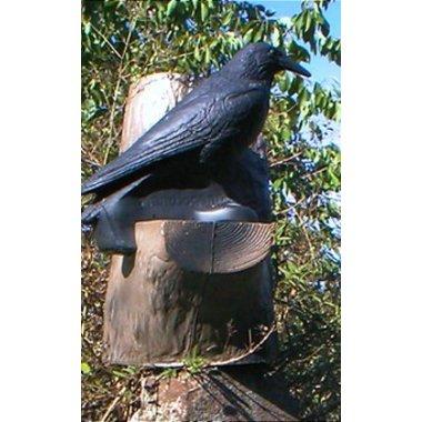 FB corvo nell'albero 3D