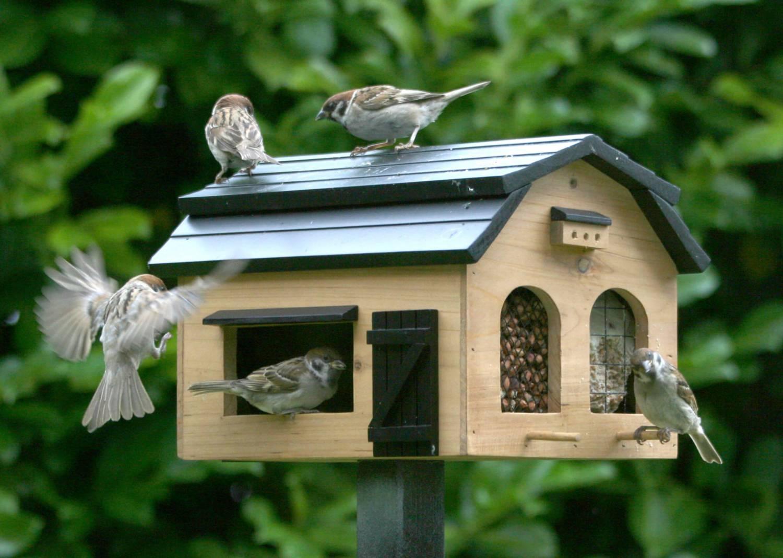- Gezelligheid in de tuin met vogeltjes