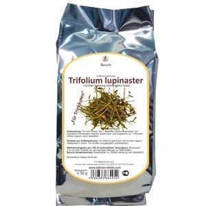 Trifolium lupinaster