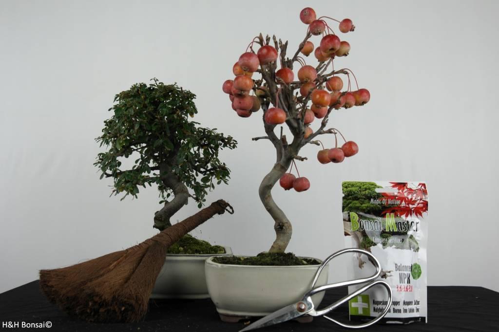 Bonsai Geschenk Kombi Zierapfel und Zwergmispel, nr. G44