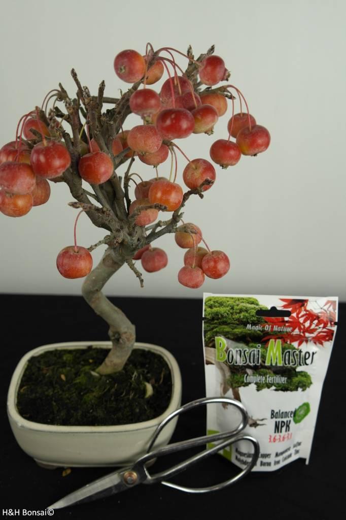 Bonsai gift set Crabapple, no. G43