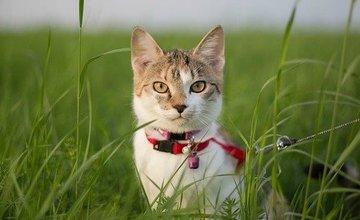 Hoe kun je je kat uitlaten met een riempje?
