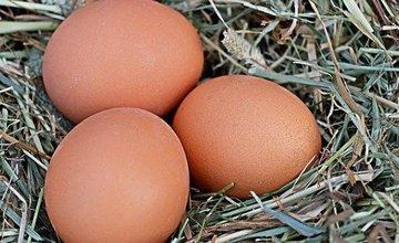 Hoe laat je je kippen veel eieren leggen?