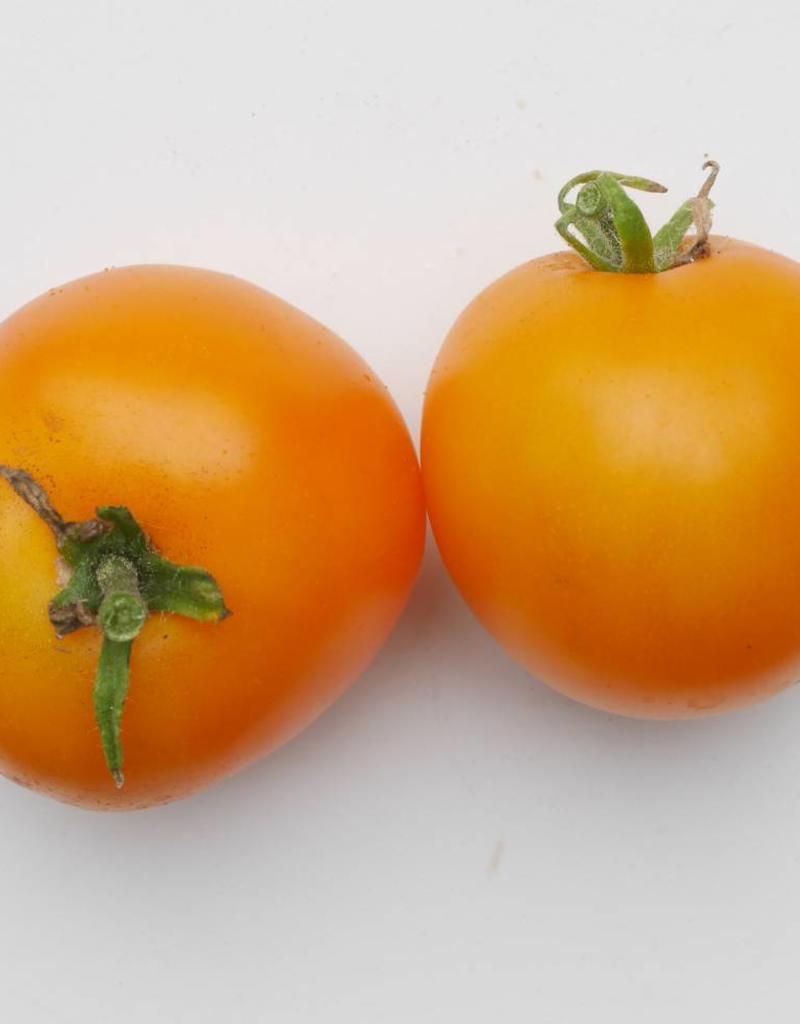 Tomaat Zonneschijn
