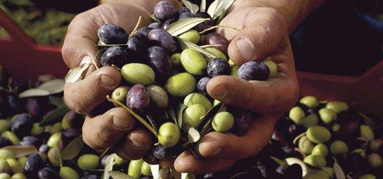 De beste olijfolie komt van Sicilië