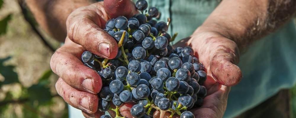 Cwines.nl - Specialist in authentieke wijnen