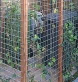 Tuindeco Gegalvaniseerd Gaas 7,5x7,5cm / B53xH173cm