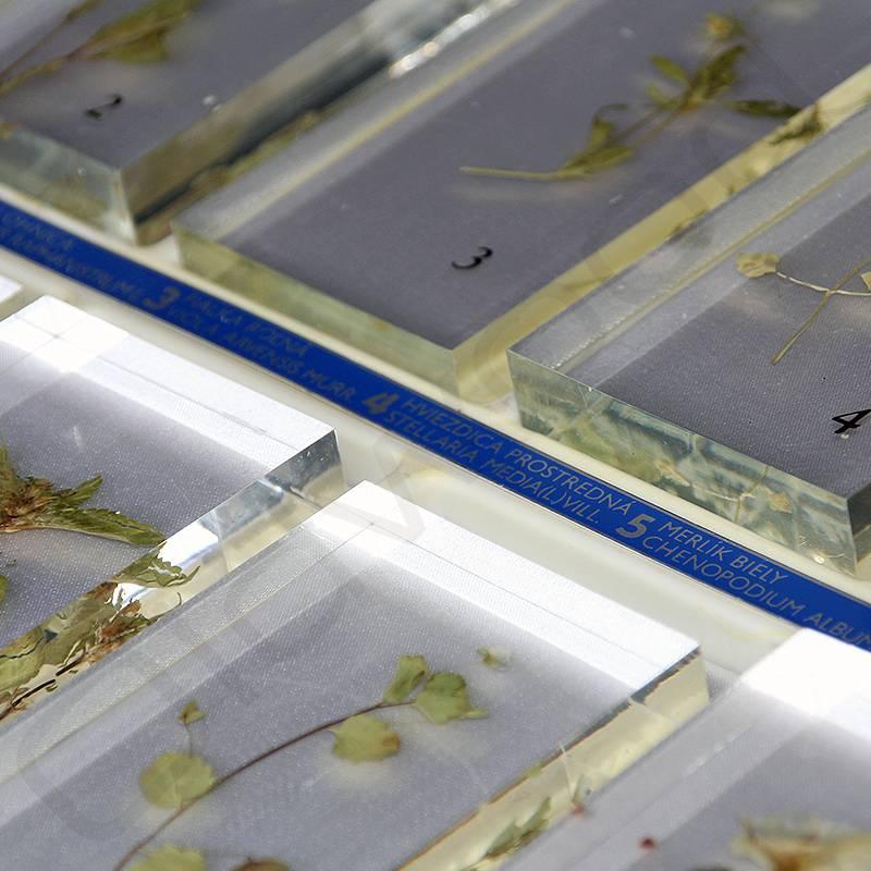 Vintage herbarium gegoten in kunststof