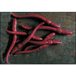Enterprise Tackle Imitation Pop-Up Redworm