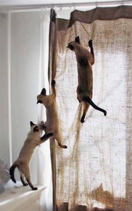 Katten Trapeze / The Cat\'s Trapeze - The Cat\'s Trapeze