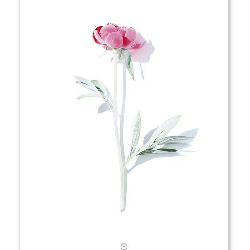 Poster Volatile Roze Bloem