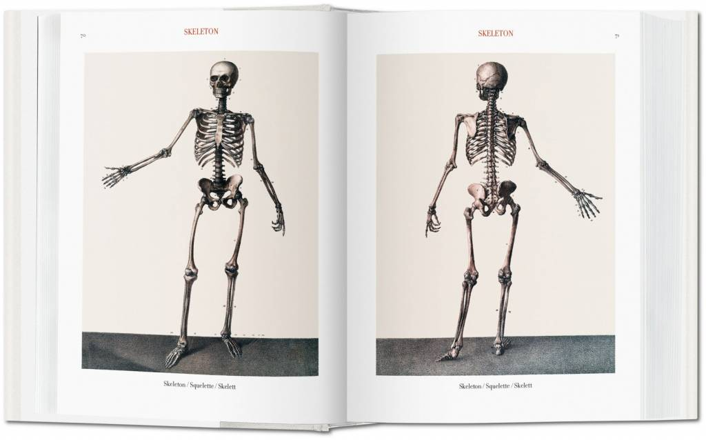 Bourgery Atlas Of Human Anatomy And Surgery Taschenboekhandel