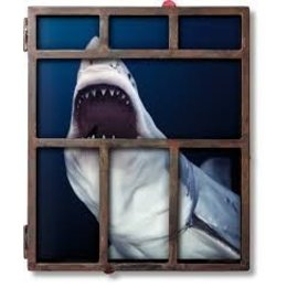 Michael Muller. Sharks. Face-to-Face with the Ocean's Endangered Predator Edition of 1000 + 50 APs
