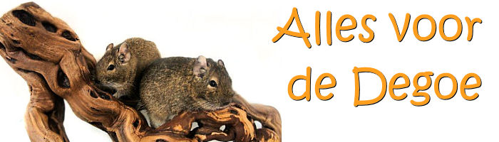 Degu food, toys, gnaws, houses, ground cover for degu
