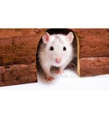 Houten Hamster Iglo