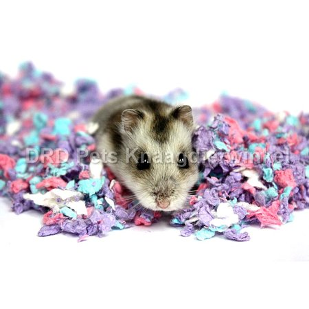 Carefresh Confetti 10L for rodents