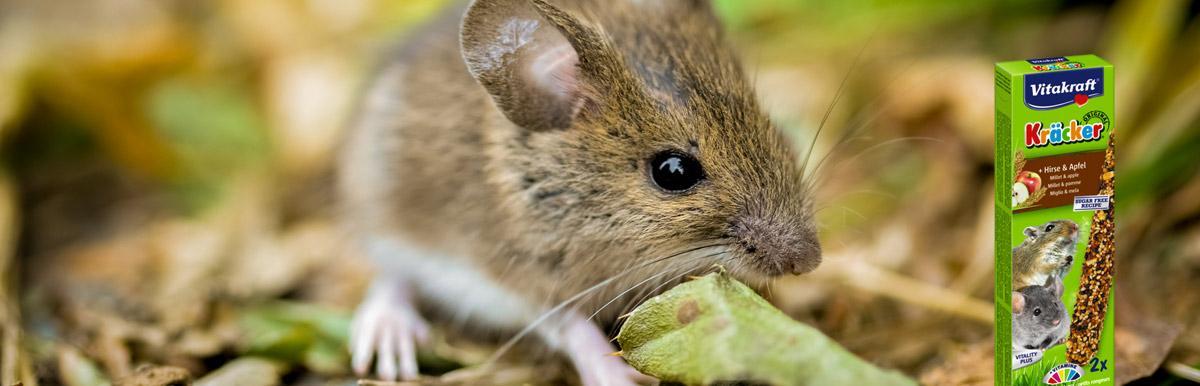 Vitakraft kracker mouse, gerbil, dwarf hamster