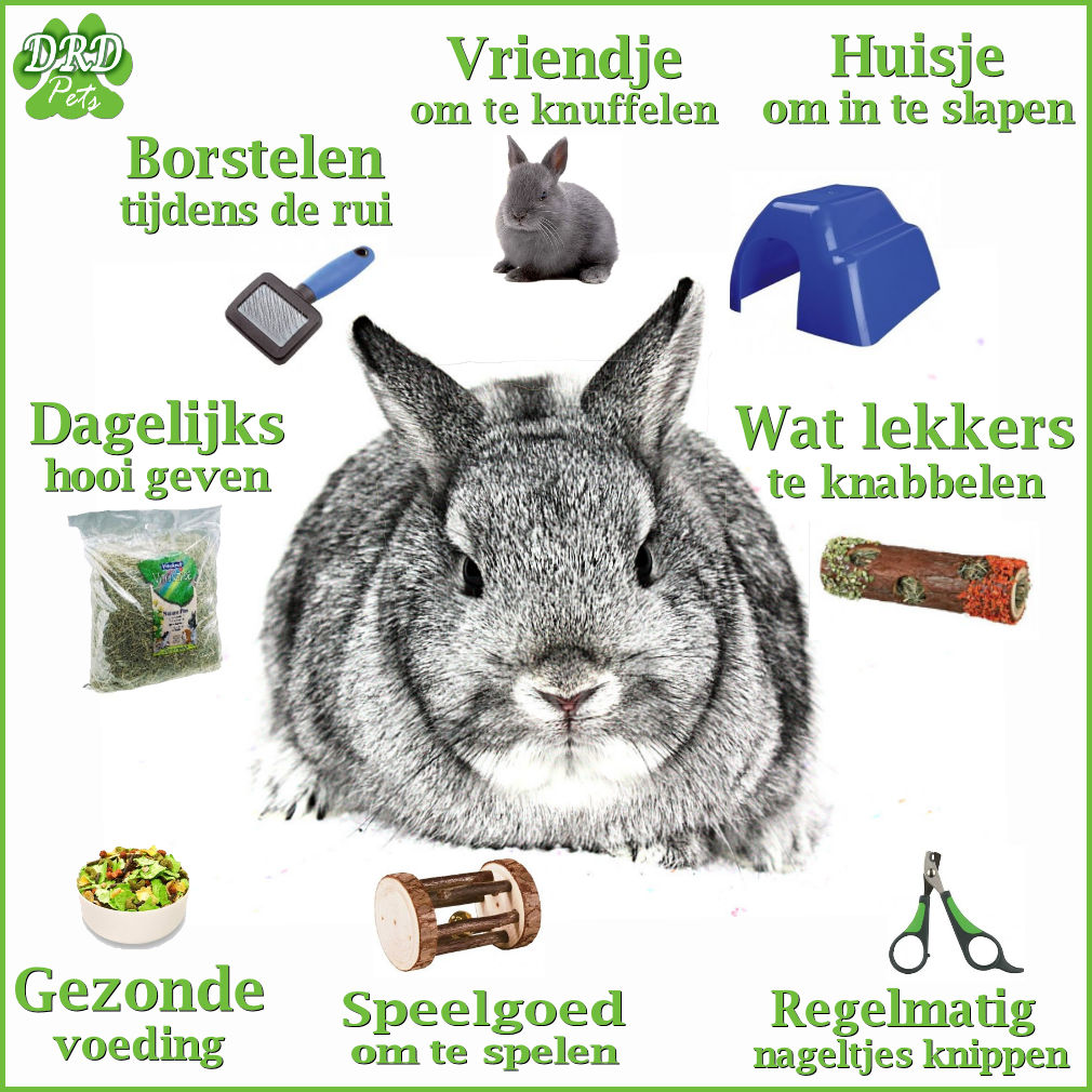 rabbit and rabbits information and facts