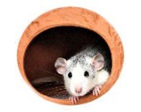 Ratten Huisjes
