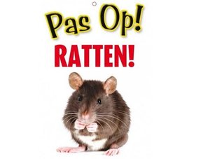 Rat Gifts