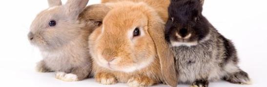 Het nieuwe konijnen houden: een maatje voor je konijn