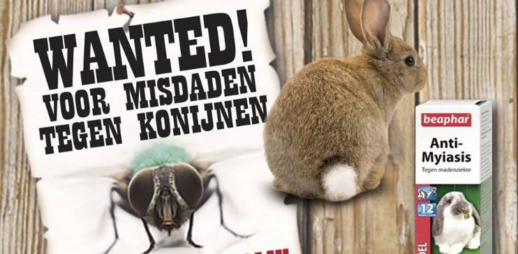 Myiasis (madenziekte) bij konijnen