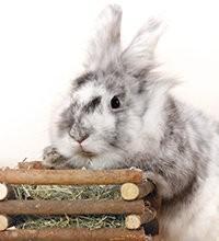 hooi, kruiden, zadden voor konijn