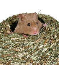 Hamster Nistmaterial