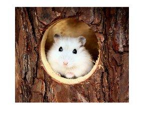 Hamster houses