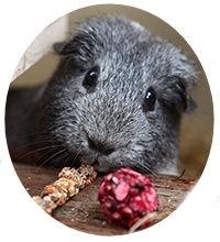 guinea Snacks