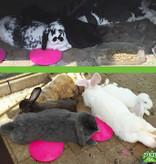 Icepod voor Konijnen en Knaagdieren