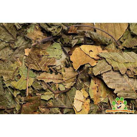 Nagertraum Walnut Blatt 80g