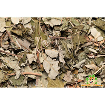 Backtrack Black Berries Leaf 80 gram
